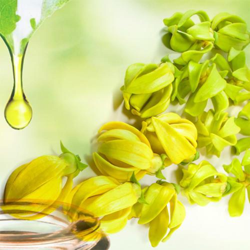 Vỗ về làn da mụn, sẹo thâm với mùi hương thư giãn của Ngọc lan tây và Khuynh diệp 2
