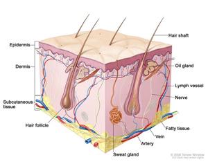 Lỗ chân lông bị tắc nghẽn bởi quá nhiều keratin 1