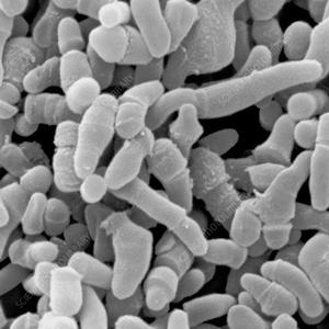 CẢNH BÁO QUAN TRỌNG về điều trị mụn mủ bằng kháng sinh 1